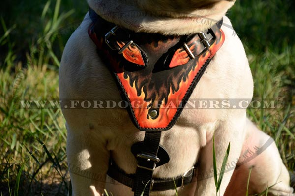 American Bulldog leather harness with comfy chest plate