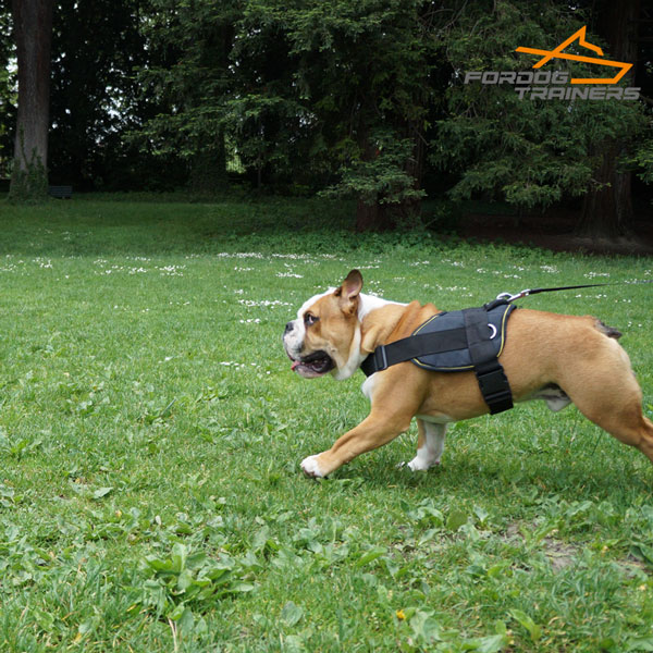 Light in Weight Nylon English Bulldog Harness with Adjustable Straps