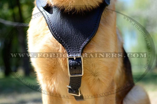 Padded Leather Chest Plate of Training Leather German Shepherd Harness