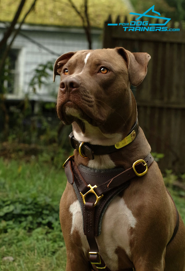 Leather Pitbull Harness with Felt Padding