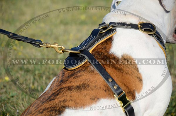 Safe Harness with padded back plate and rust-resistant hardware