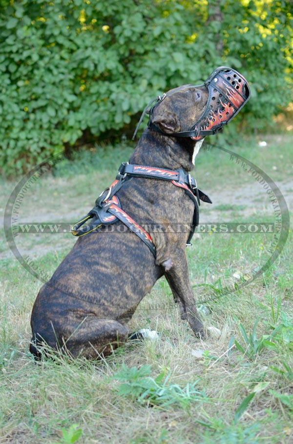 Amstaff Harness Handpainted Fire Image