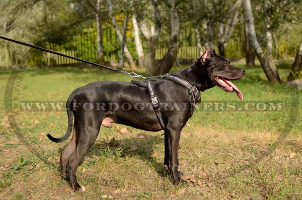 Extravagant Design Leather Dog Harness