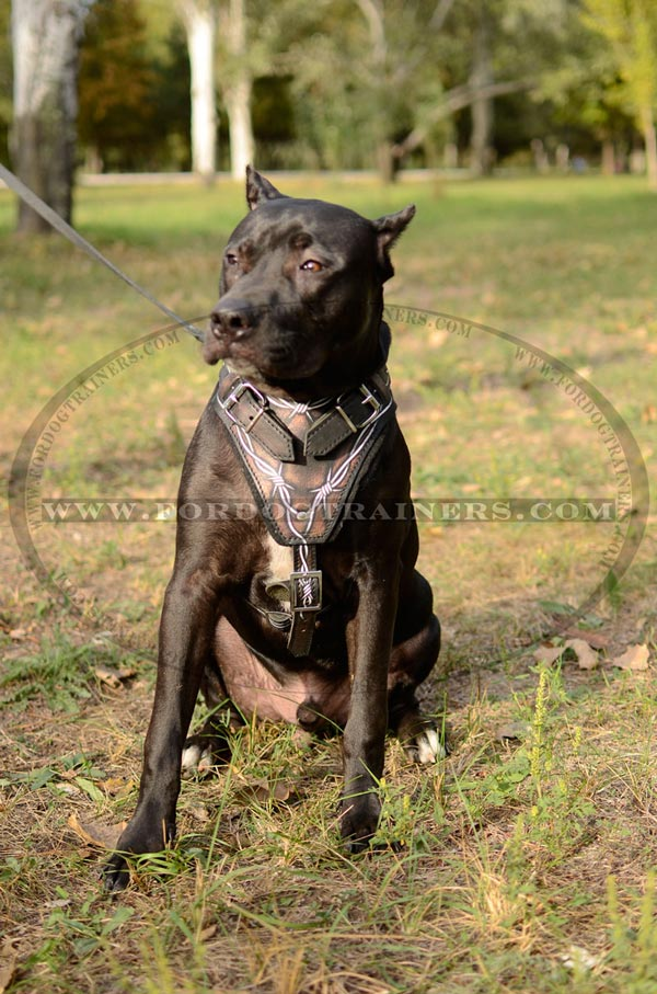 Leather Pitbull Harness Comfortable to Wear