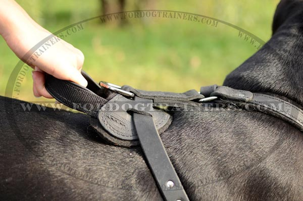 Stitched reliable handle for leather Pitbull harness