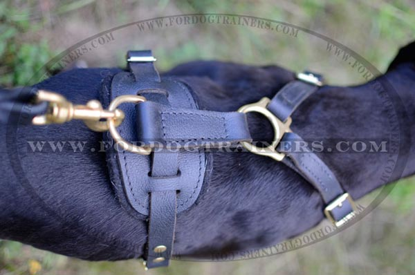Rust proof brass hardware for tracking leather Pitbull harness