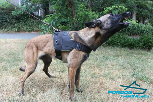 Strong Nylon Belgian Malinois Harness for Agitation Training