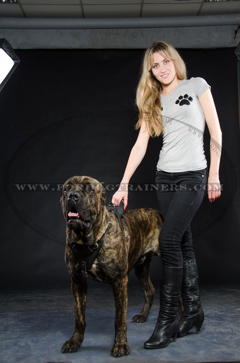 Agitation protection attack leather dog harness perfect for your cane corso training harness geenschuldenfo Images