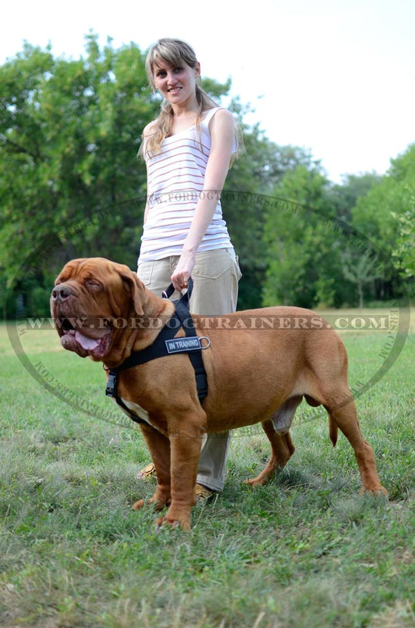 Dogue-de-Bordeaux nylon harness with handle