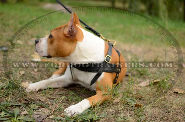 Durable Amstaff Harness for Pulling
