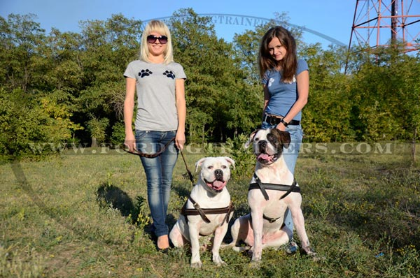 Leather American Bulldog harness