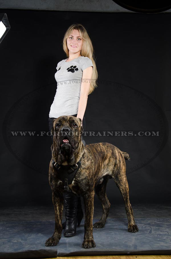 Perfect Cane Corso Harness with adjustable straps