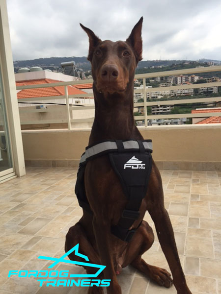 Nylon Doberman Harness with Reflective Front Strap