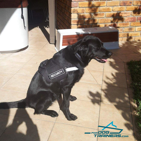 Reflective Nylon Labrador Retriever Harness for Working Dogs