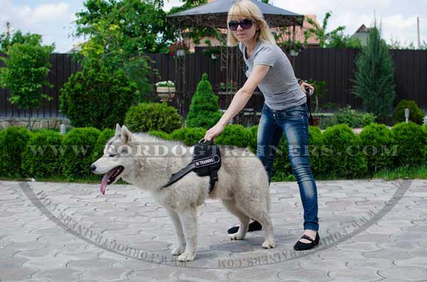Pulling nylon Siberian Husky harness with reflective strap