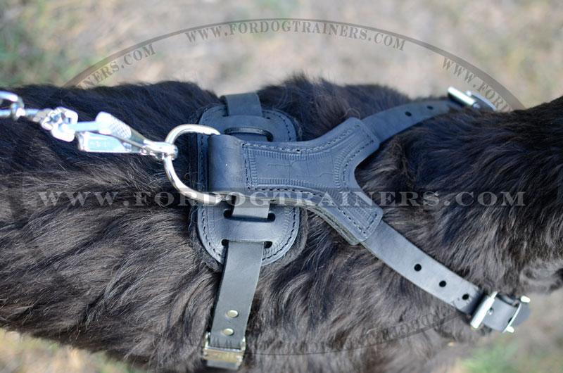 Riesenschnauzer dog harness spiked Y shaped leather back view big take spiked leather dog harness fashion dog harness