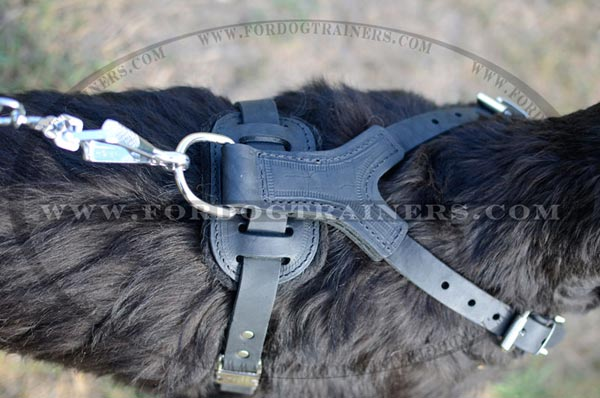 Spiked Dog Harness for Training and Walking