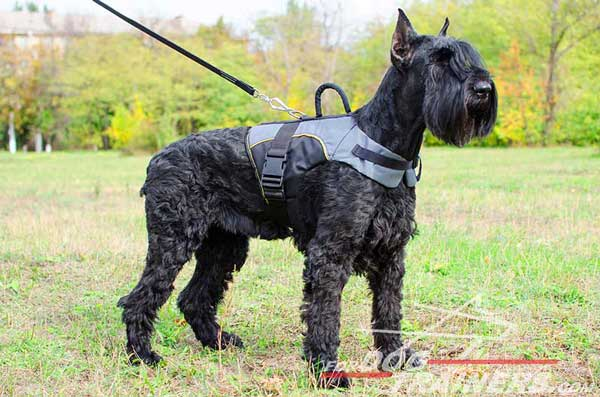 Riesenschnauzer Nylon Vest Made of Waterproof Material
