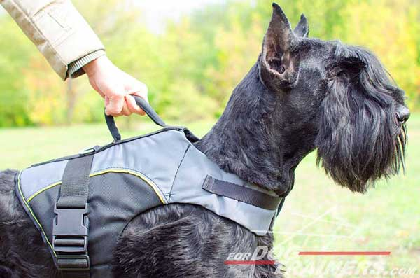 Rehabilitation Riesenschnauzer Vest with Be in Control Handle