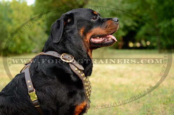 Leather Canine Harness with Brass Studs