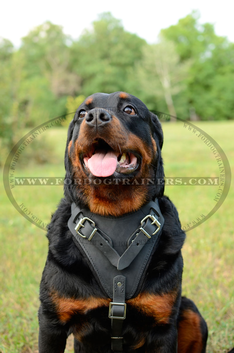 Buy Padded Leather Dog Harness| Dog Harness|Training Harness