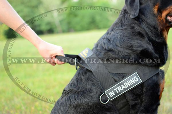 Nylon Dog Harness with easy grip handle