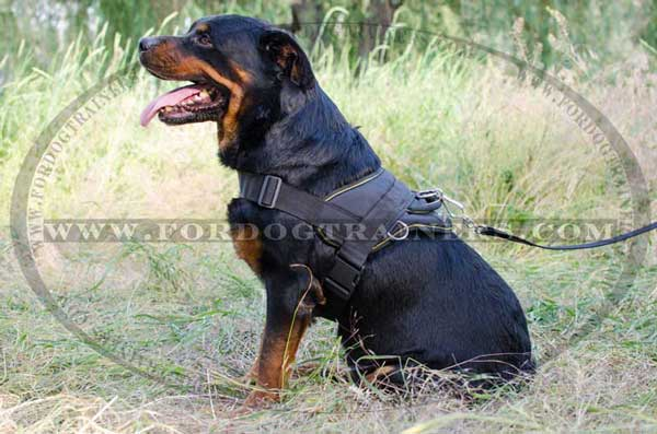 Rottweiler Harness with side rings for pulling