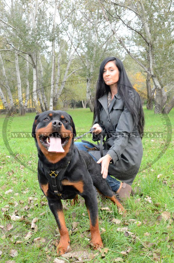 Rottweiler Dog Training Harness Absolute Quality and Comfort
