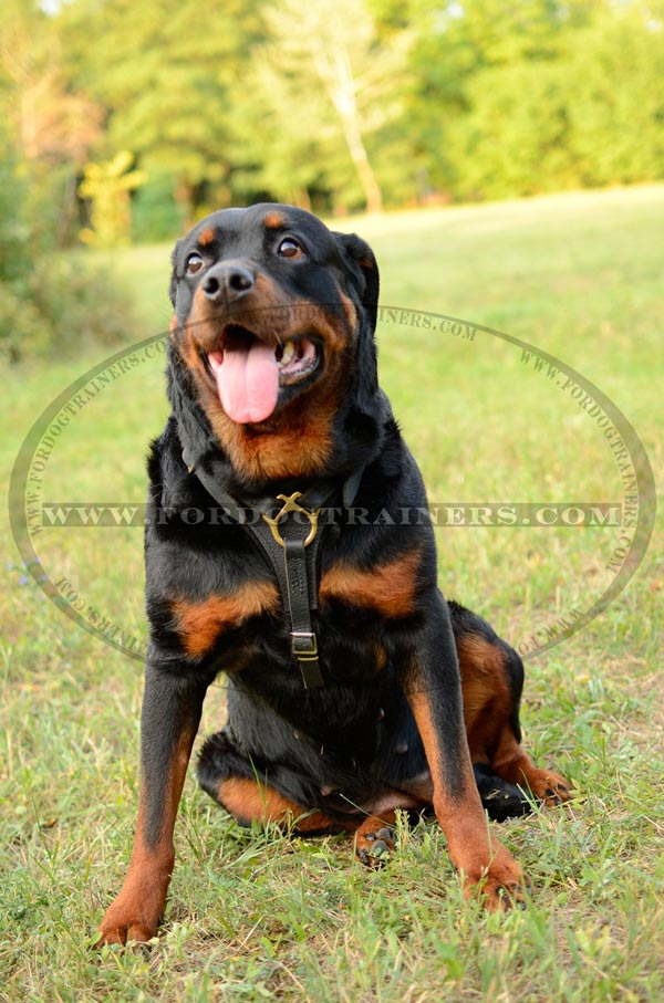 Rottweiler dog harness for easy tracking