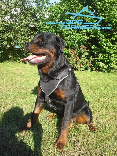 Easy Adjustable Leather Canine Harness