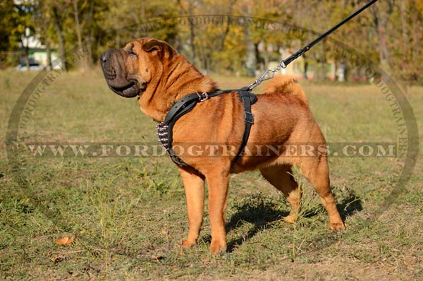 shar pei dog breed standard dog harness dog collar dog leash dog muzzle dog training. Black Bedroom Furniture Sets. Home Design Ideas