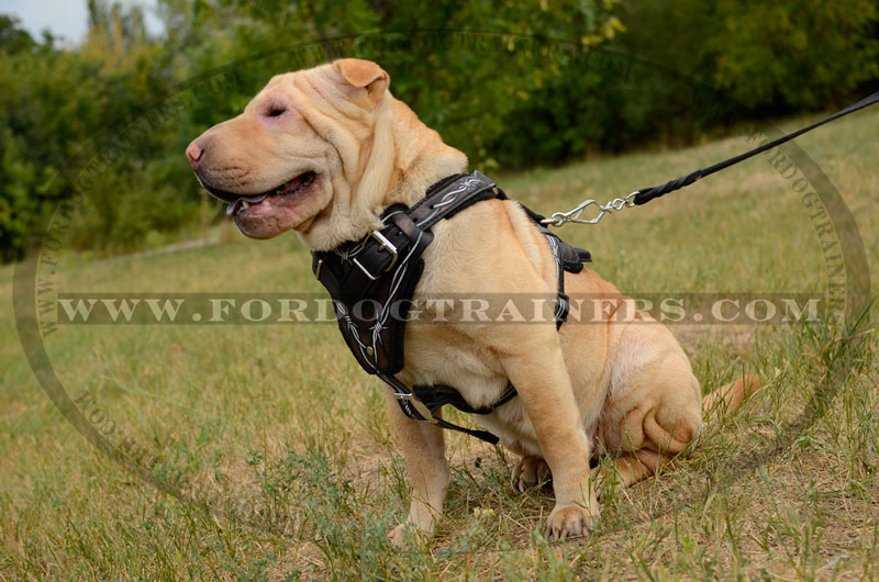 Sharpei dog harness barbed wire painted big buy stylish dog harness y shaped dog harness wire dog harness at bayanpartner.co