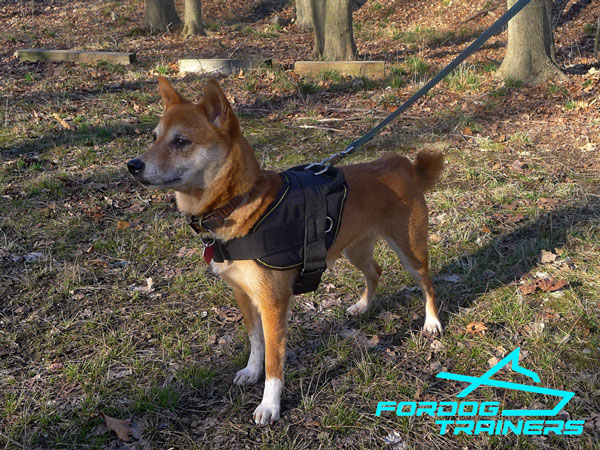 Kaede Walking in Extra Durable Nylon Dog Harness
