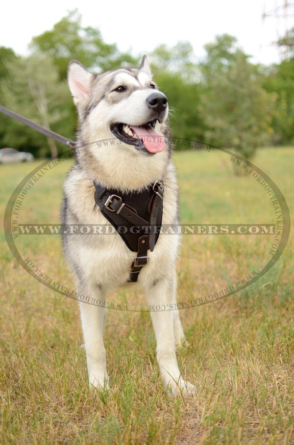 Training Leather Siberian Husky Harness