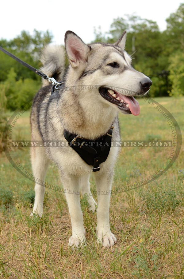 Walking Leather Siberian Husky Harness