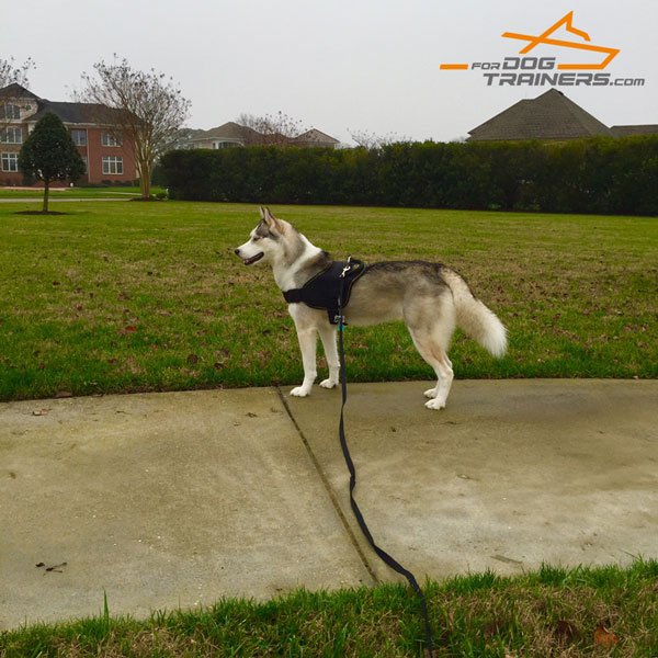 Athena Walking in Extra Durable Nylon Dog Harness