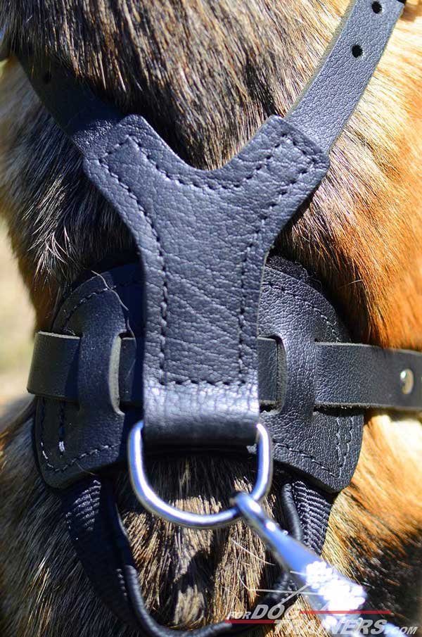 Nickel Plated D-Ring on Leather German Shepherd Harness