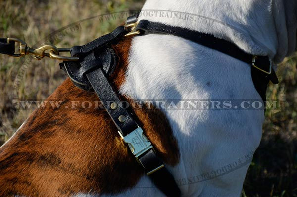 Buckle and brass hardware on harness