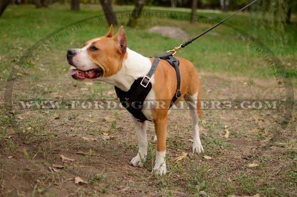 Agitation Leather Staffordshire Terrier Harness Training Dog Supply