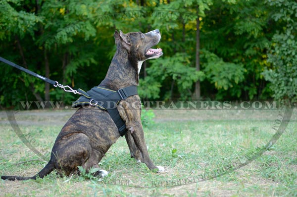 Nylon Pulling Staffordshire Terrier Harness for Training