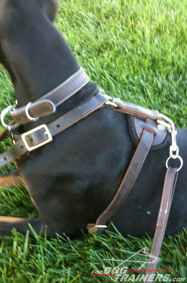 Wide Leather Straps and Back Plate of Leather Doberman Harness