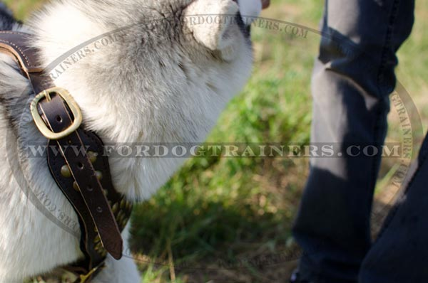 Reliable leather Siberian Husky harness with brass buckles
