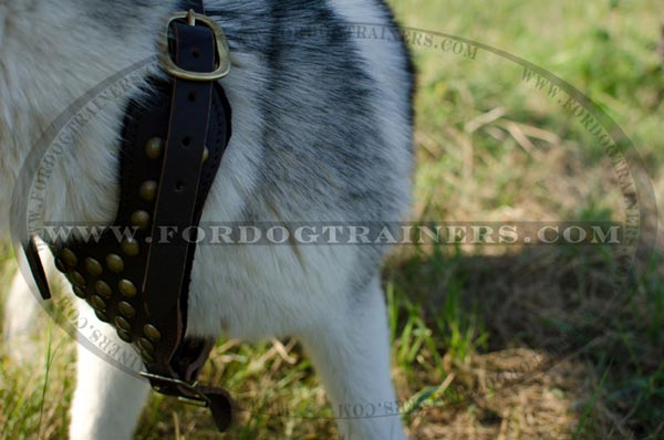 Thick felt padded Siberian Husky harness with brass studs