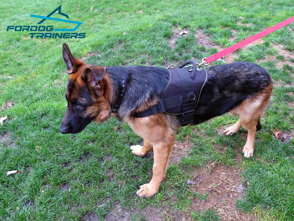 Light in Weight Nylon German Shepherd Harness with Comfy Handle