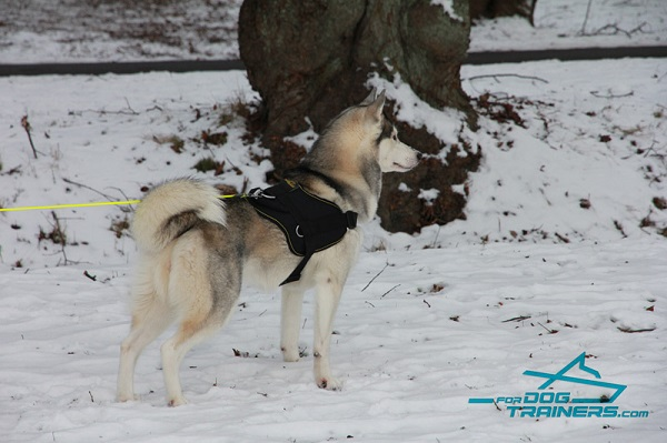 Walking and Tracking Hylon Harness for Husky Comfort