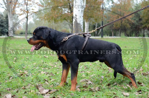 Pure Leather tracking Rottweiler harness