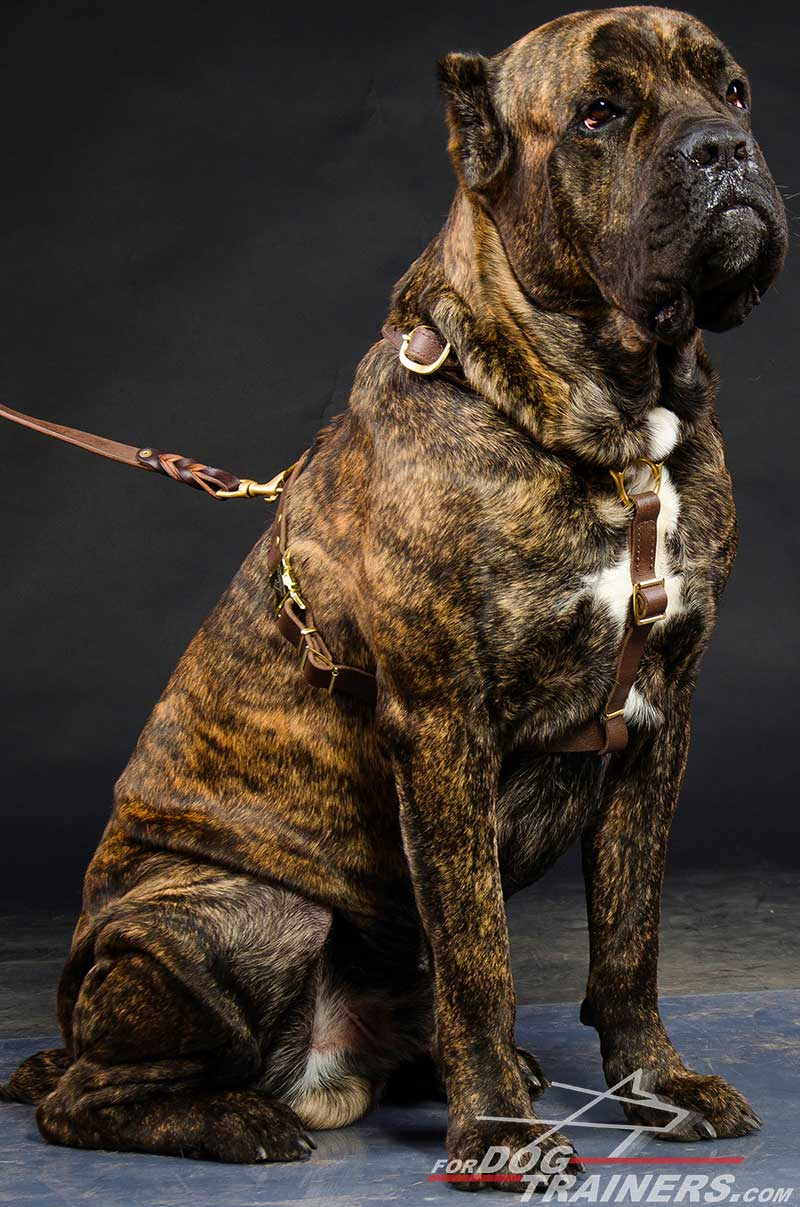 Tracking Walking Dog Harness Lightweight For Cane Corso H Big on Leather Dog Harness