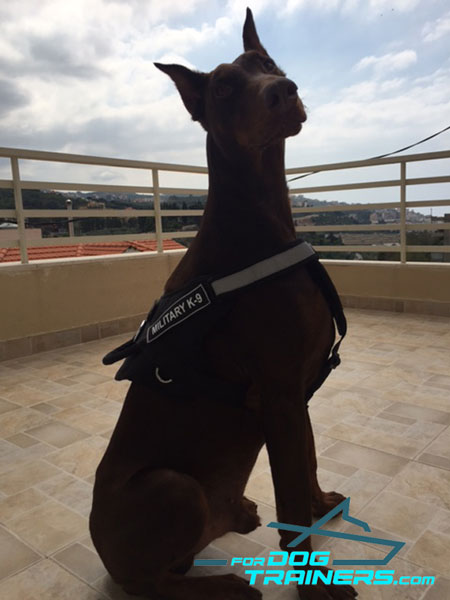 Reflective Nylon Canine Harness for Better Control While Training