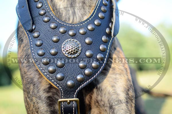 Luxury medallion and studs for walking Great Dane harness