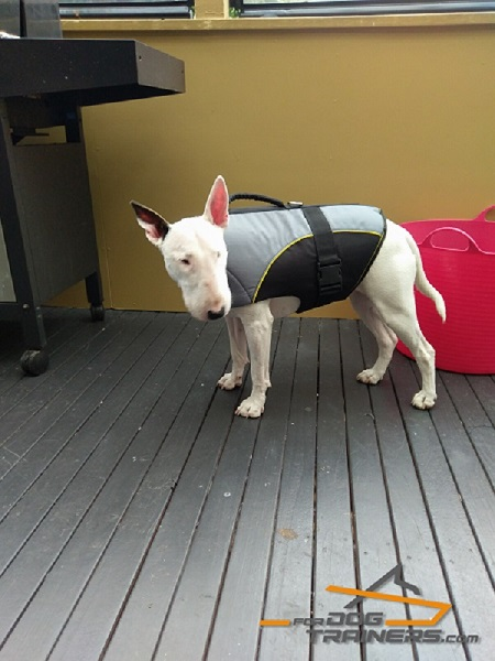 Nylon English Bullterrier Harness for Rehabilitation and Winter Walking